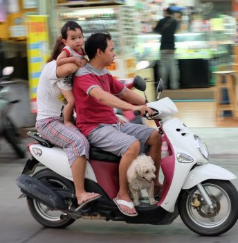 Area Man Takes His Entire Family Plus the Dog for a Ride Going the Wrong Way Down a One Way Street