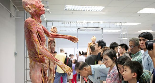 While Touring the Museum of the Human Body at a University in Bangkok, Visitors Are Doing Their Best Not to Show Any Emotions