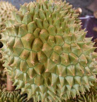 'Durian Thief' Shot Dead by Farmer in Thailand