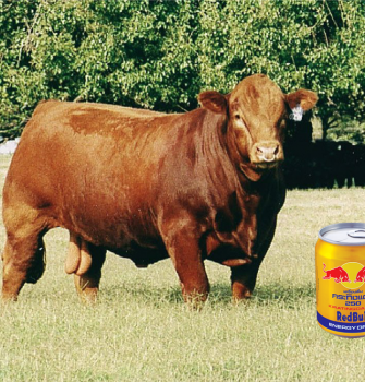 500 Million Red Bulls Slaughtered Annually to Make Popular Energy Drink